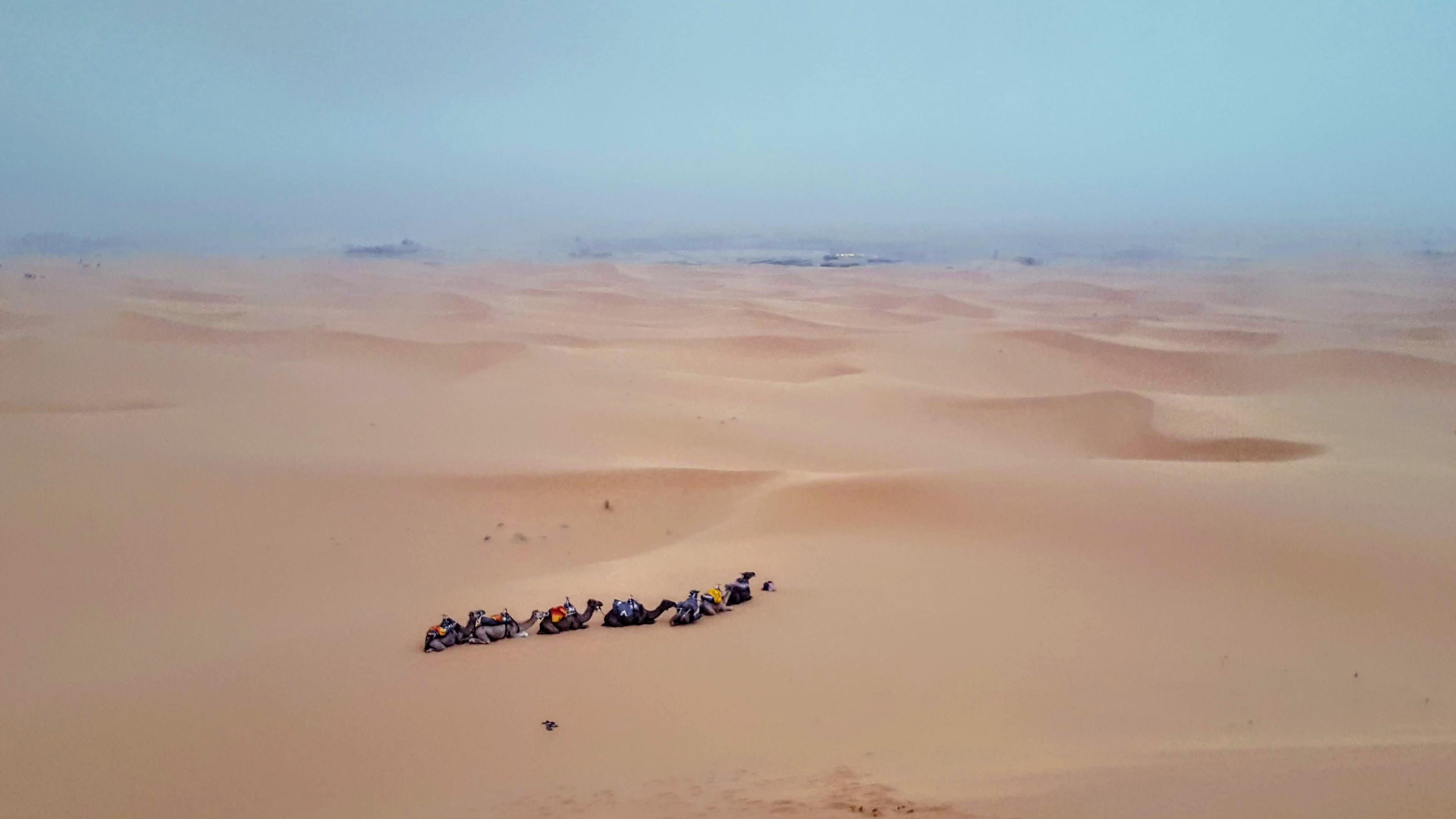 camel_trip