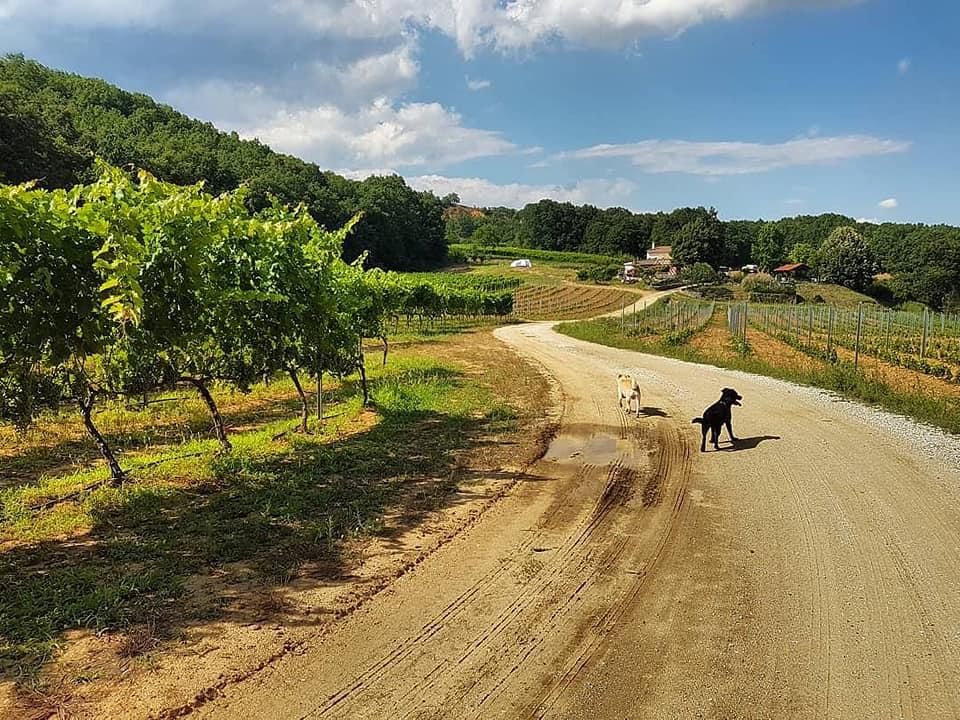 winery_goumenissa