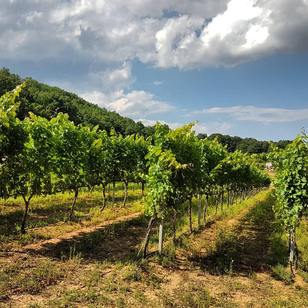 wine_tourism_1